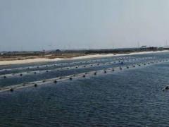 池塘内网箱养殖海参注意事项