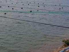 关于池塘海参越冬管理技术的六个建议